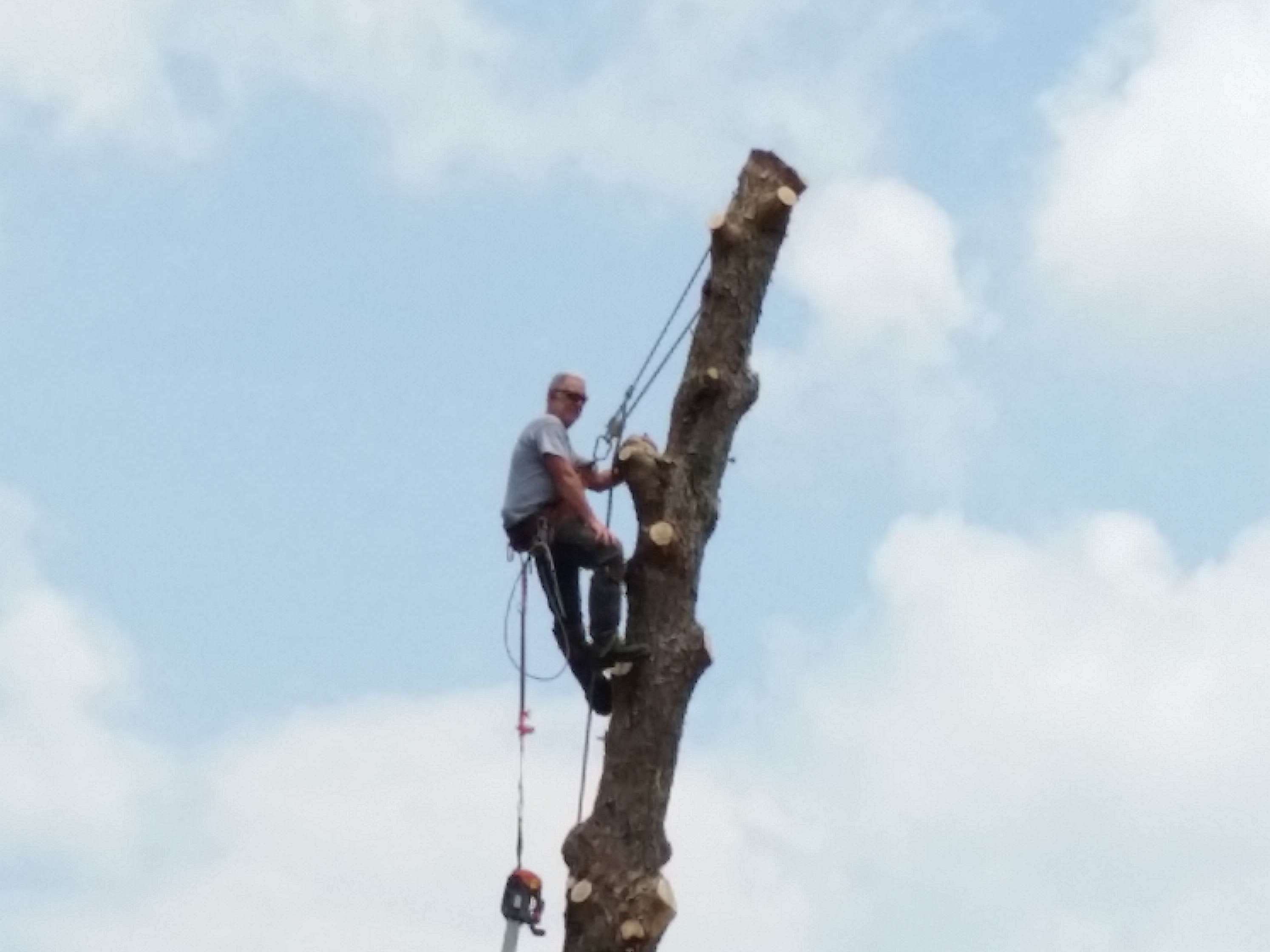 tree removal in Brooksville, FL