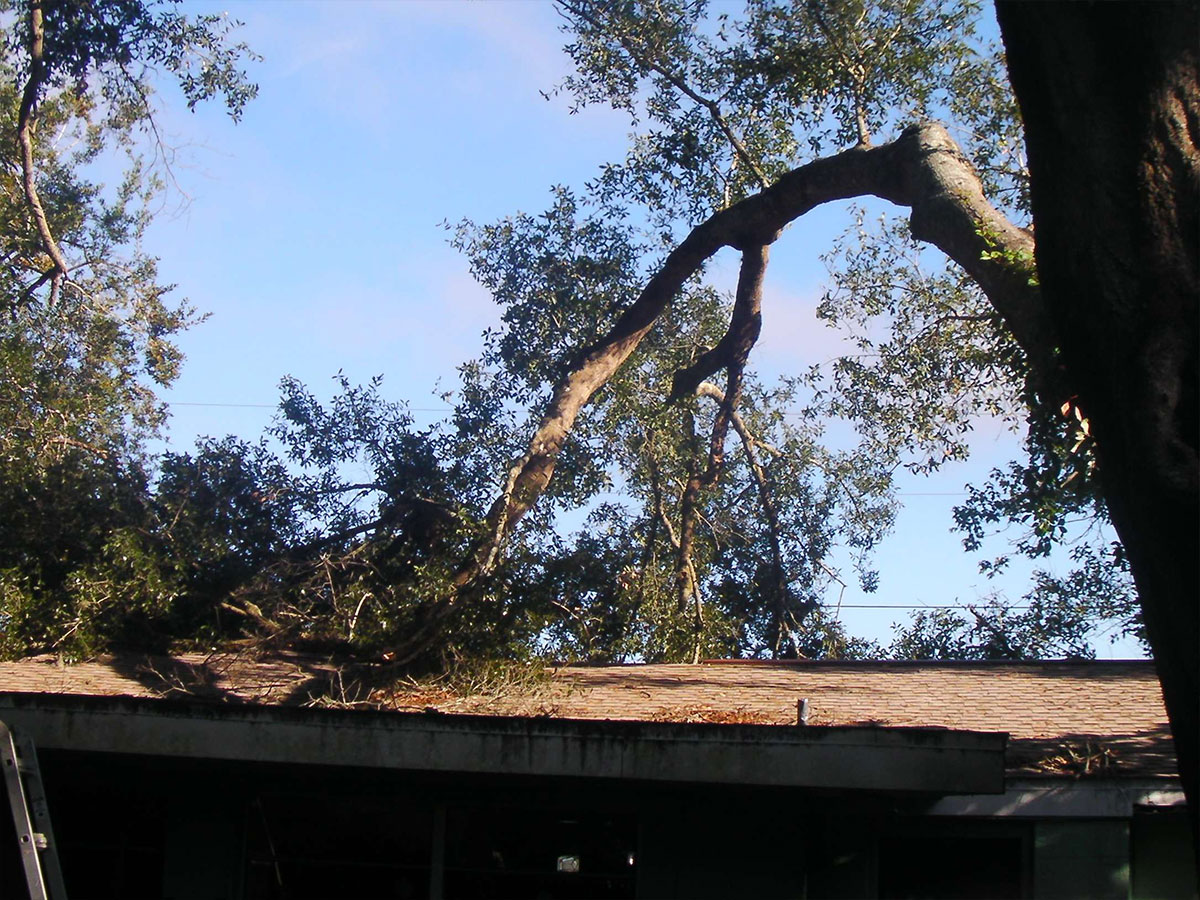 tree removal insurance in Brooksville, FL